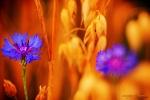kwiatek_2012_01