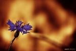kwiatek_2012_03
